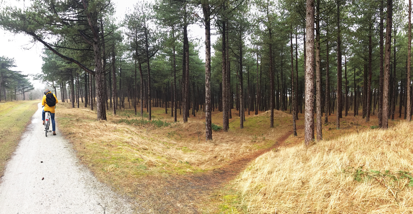 Cycling through the forest and the dunes / photo by Annemarie Gorissen